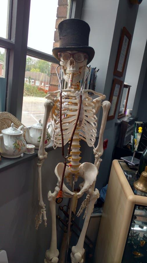 Dapper Skeleton. Dapper looking skeleton royalty free stock photo