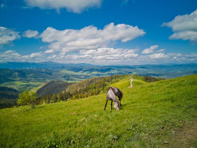 Dapple серая лошадь ест максимум травы на высокогорных лугах в горах стоковые фото