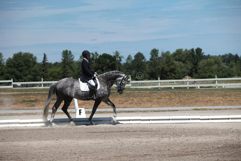 Dapple Gray Dressage Horse and Rider at a show. Stunning dapple gray dressage horse and middle-aged rider competing at a show on a beautiful summer day stock images