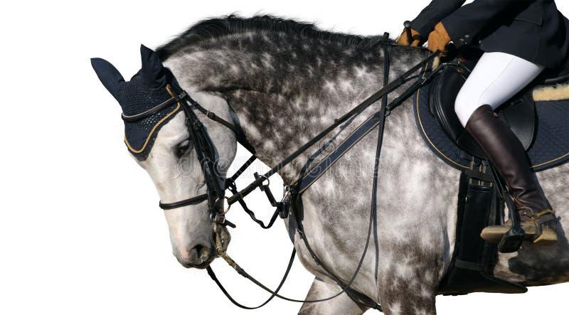 Dapple-gray horse royalty free stock photography