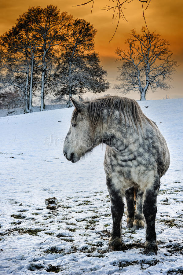 Download Dapple Grey Horse At Winter Sunset Stock Image - Image of beautiful, outdoors: 35415481