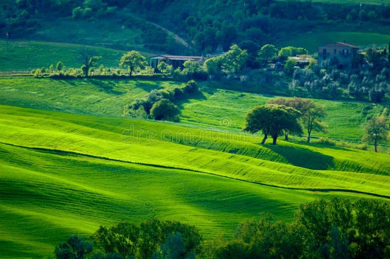 dappled зеленые холмы стоковые изображения rf