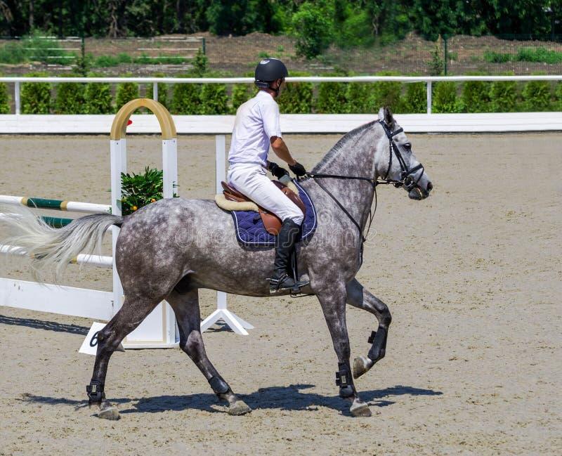 Dappled серые лошадь и всадник в белой рубашке над скачкой стоковая фотография