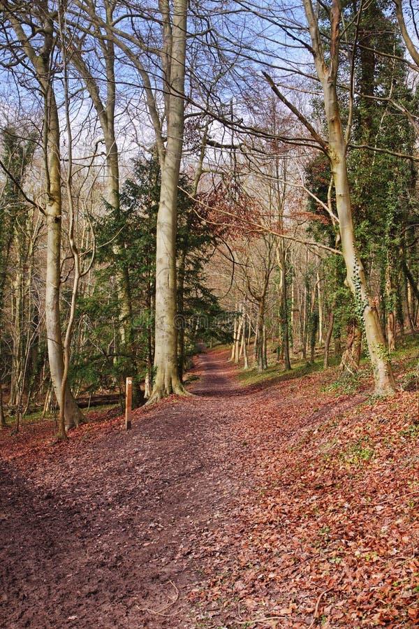 Dappled Sonnenschein auf einer englischen Waldspur stockfotografie