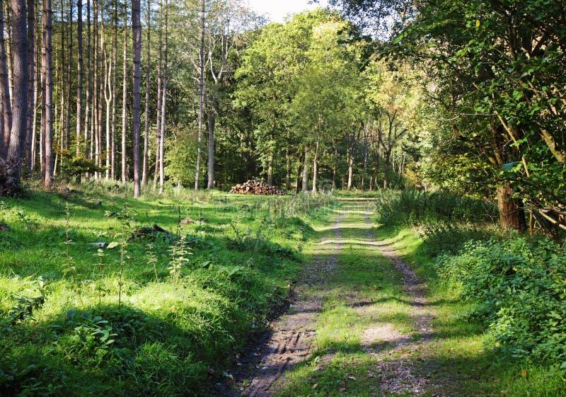Dappled Sonnenschein in einem englischen Wald stockfoto