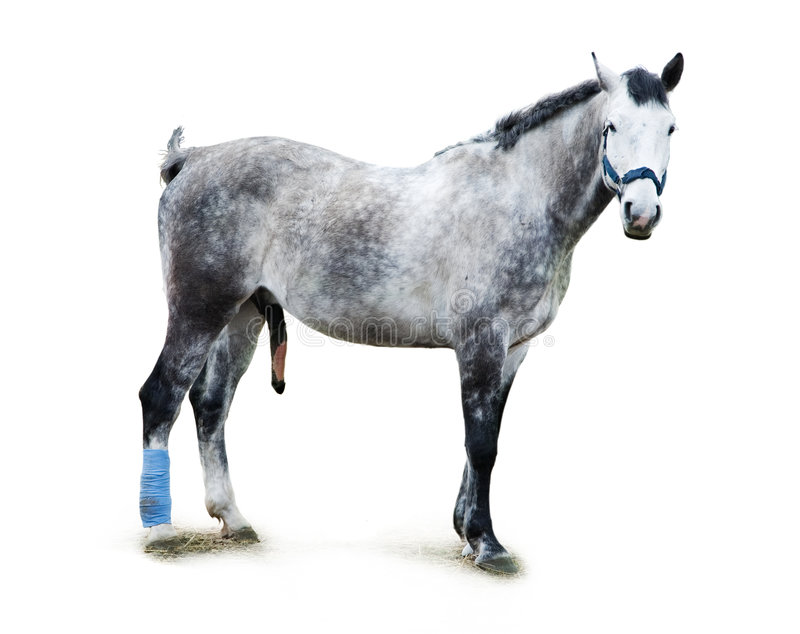 Dappled Stallion stockfotos
