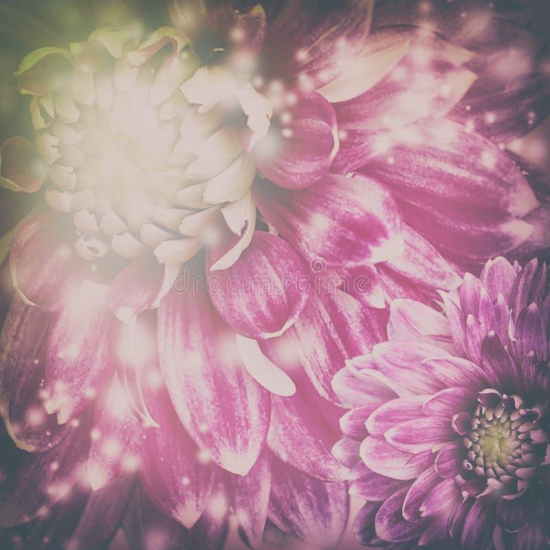 Darck a modifié la tonalité le fond de fleurs de pourpre images libres de droits