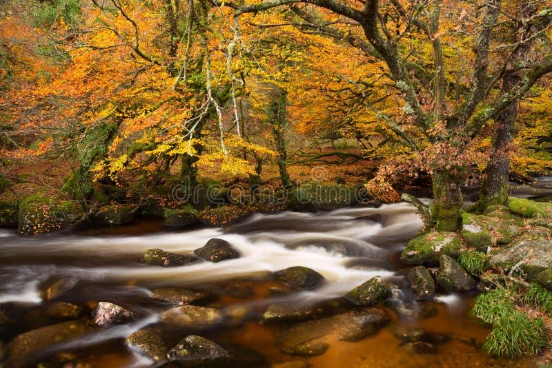 Dard de rivière photo libre de droits
