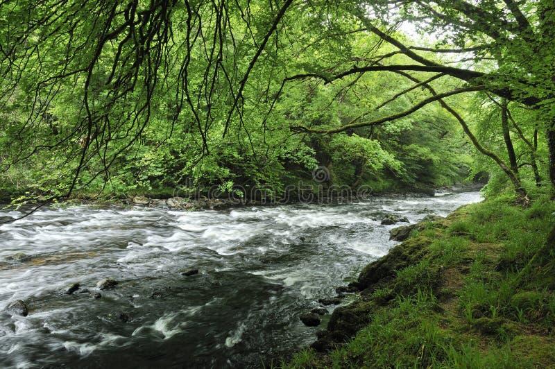 Dard de rivière photographie stock
