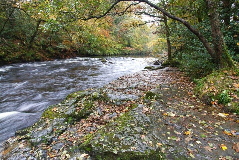 Dardo del fiume al nuovo ponte, Holne, Dartmoor Inghilterra fotografia stock libera da diritti