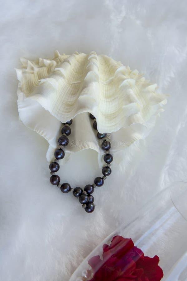 Dargestellte weiße Schatulle der zweischaligen Muschel und Armband von schwarzen Perlen stockfotos
