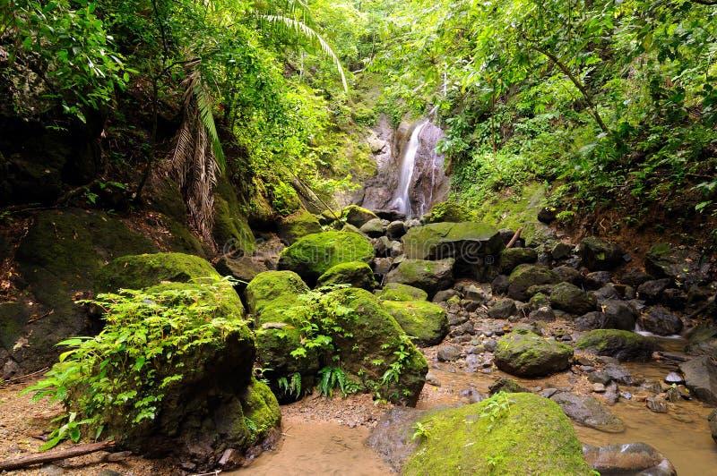 Darien jungle. Wild Darien jungle near Colombia and Panama border. Central America, american, view, adventure, background, colombian, exotic, landscape, natural stock image