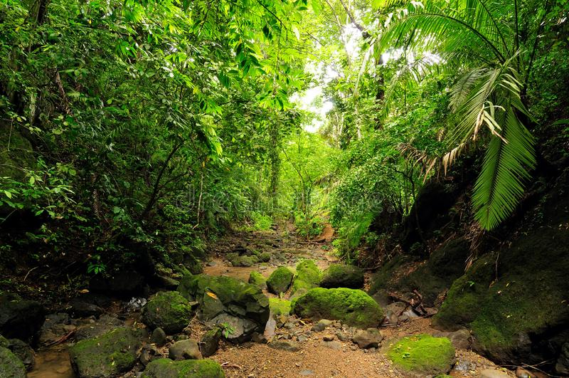 Darien jungle. Wild Darien jungle near Colombia and Panama border. Central America, american, view, adventure, background, colombian, exotic, landscape, natural royalty free stock photo