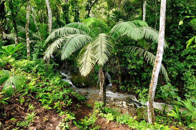 Darien jungle. Wild Darien jungle near Colombia and Panama border. Central America, american, view, adventure, background, colombian, exotic, landscape, natural royalty free stock image
