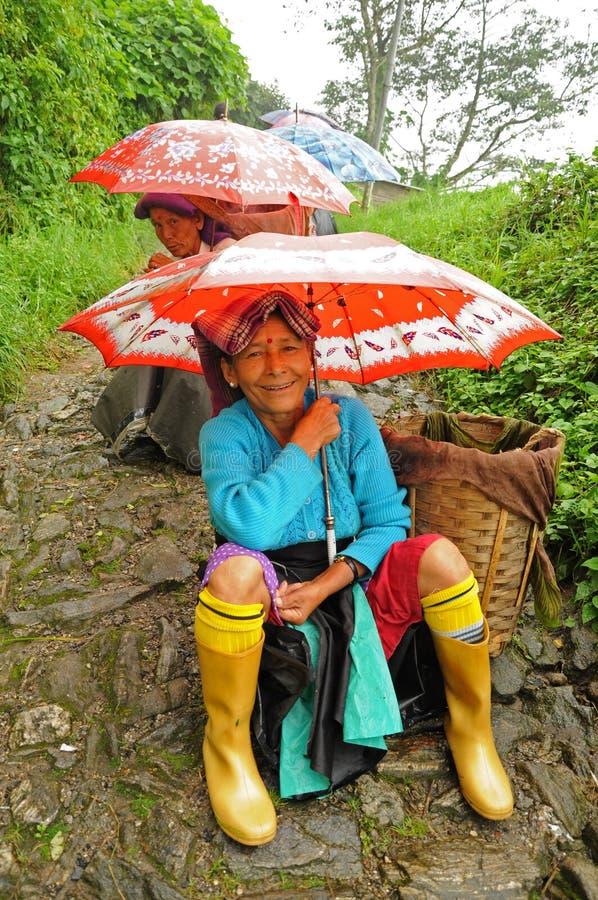 darjeeling чай подборщиков Индии стоковое фото rf