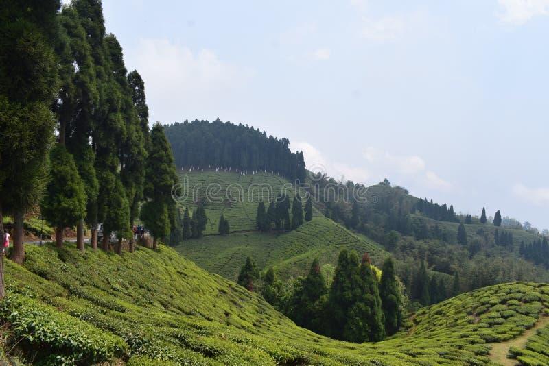 Darjeeling piękni wzgórza zdjęcia stock