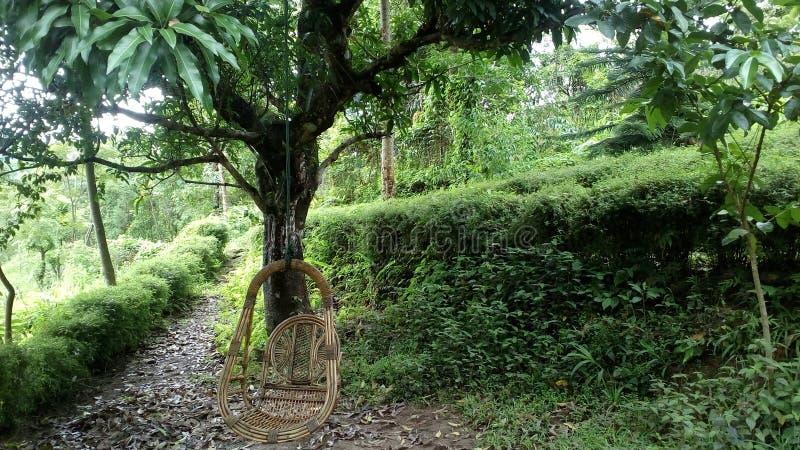 Darjeeling royalty free stock photography