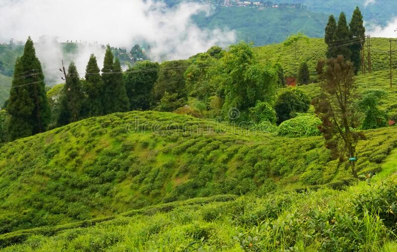 Darjeeling is a town in India. `s West Bengal state, in the Himalayan foothills stock photo