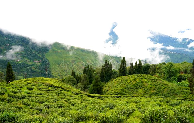 Darjeeling is a town in India. `s West Bengal state, in the Himalayan foothills stock image