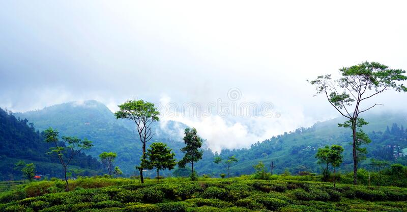 Darjeeling is a town in India. `s West Bengal state, in the Himalayan foothills royalty free stock photos