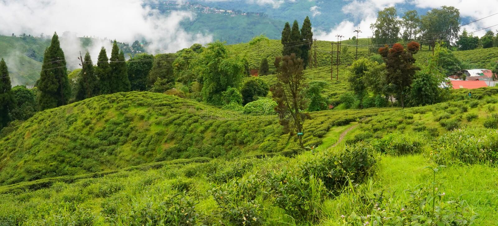Darjeeling is a town in India. `s West Bengal state, in the Himalayan foothills stock photography