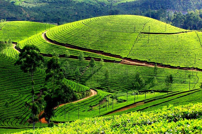 Darjeelings-Bild stockbild