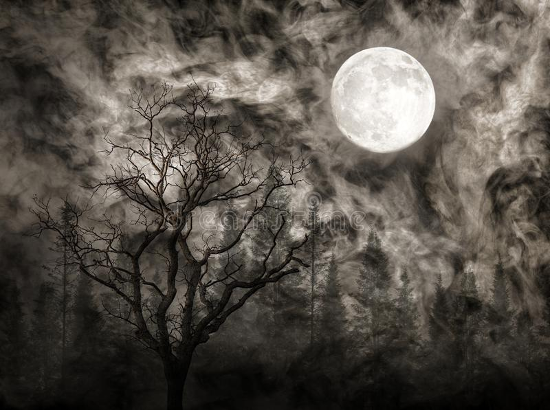 Bare tree and fir forest under full moon at night stock image