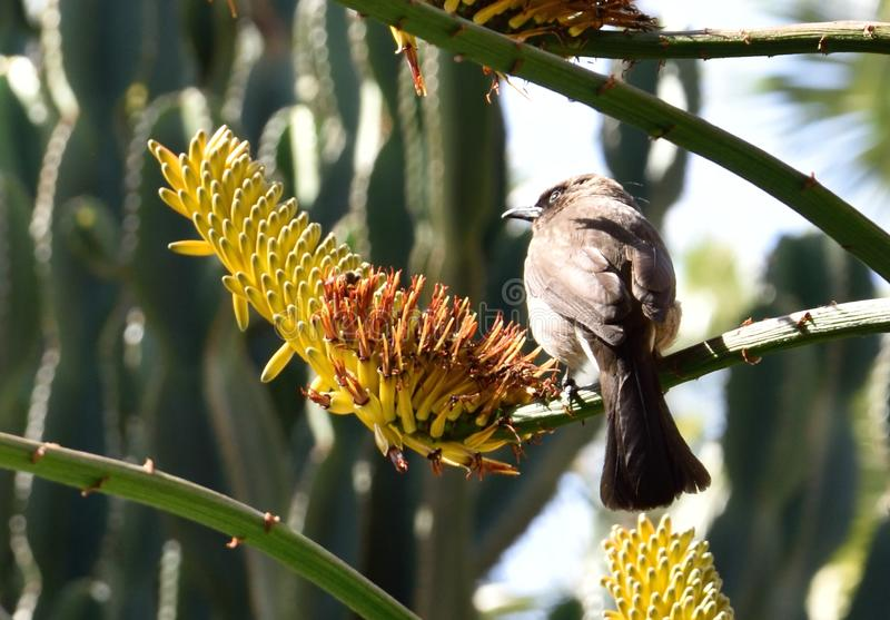 Dark bird on twig near yellow flower royalty free stock image