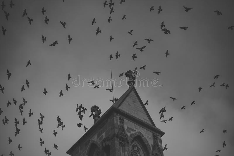 Dark birds fly on cloudy sky near top of gothic castle. Medieval architecture, dramatic sight, classy style concept. royalty free stock image