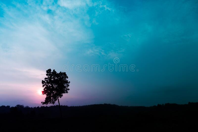 Dark black silhouette tree at sunset in fantasy purple blue sky nature landscape background. Dark black silhouette tree at sunset in fantasy purple blue sky stock images