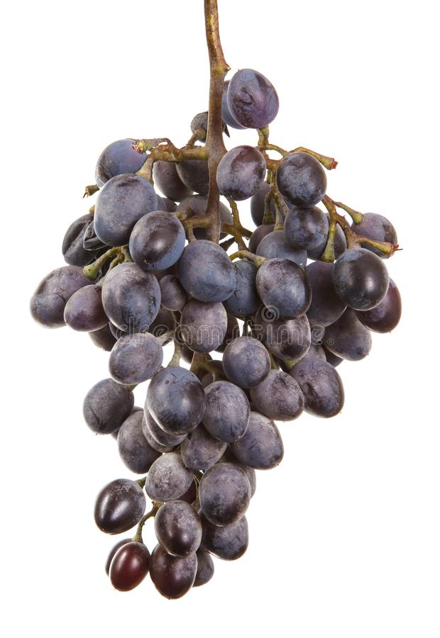 Dark blue grapes. Bunch isolated on white. Background stock photos