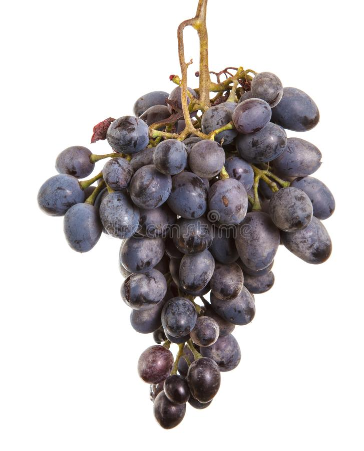 Dark blue grapes. Bunch isolated on white. Background royalty free stock images