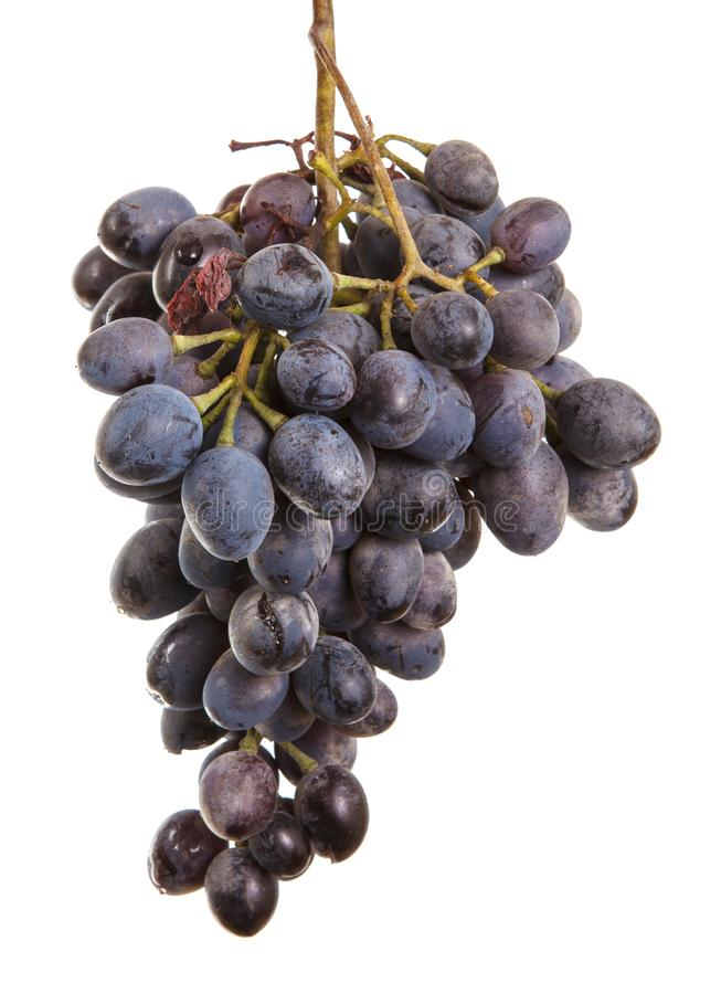 Dark blue grapes. Bunch isolated on white. Background stock images