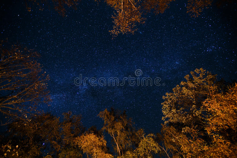 Dark blue night starry sky above the mystery autumn forest with orange and yellow trees. Long exposure photo of milky. Way stars in the woods royalty free stock photos