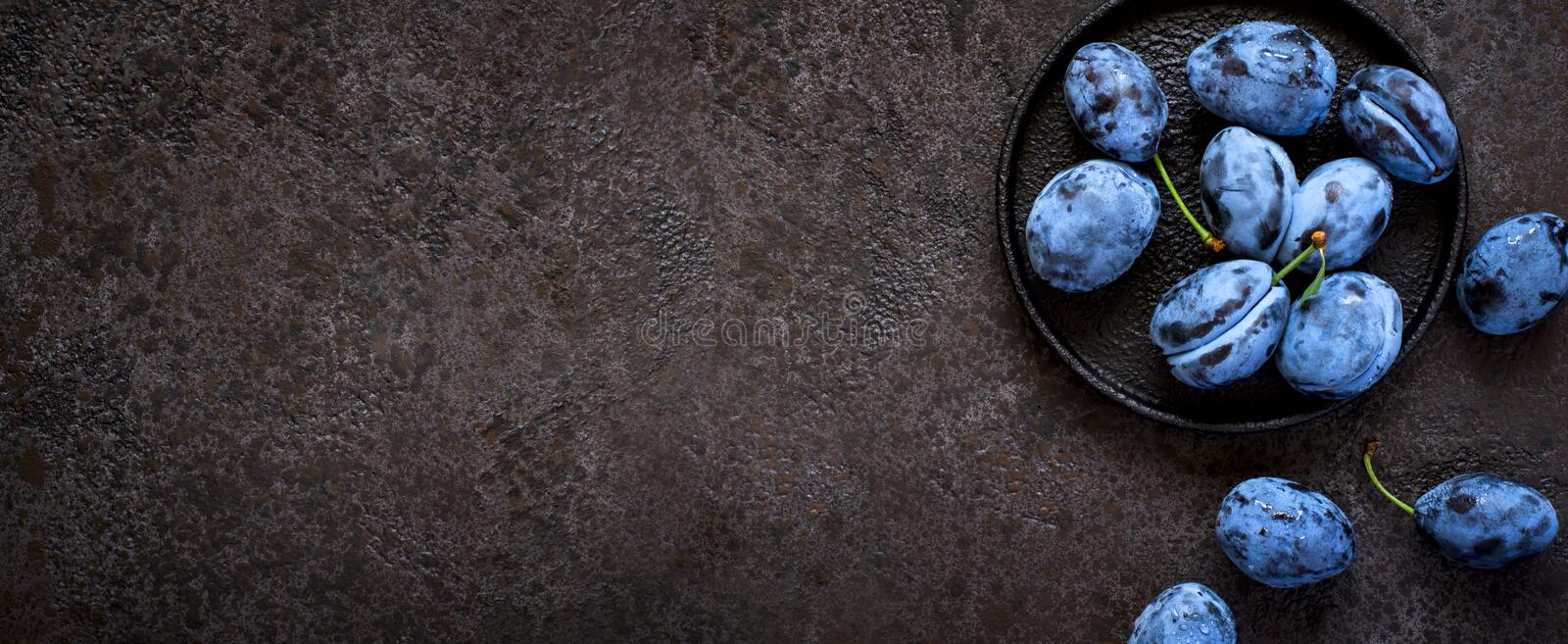 Dark blue plums in cast iron plate on black background, banner long format stock image