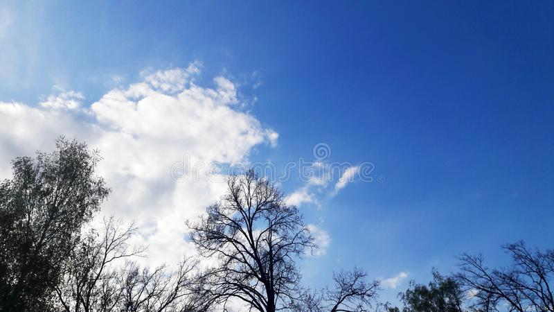 Dark blue sky and light airy white clouds and treetops. Pictured in the photo Dark blue sky and light airy white clouds and treetops background beautiful beauty royalty free stock photo