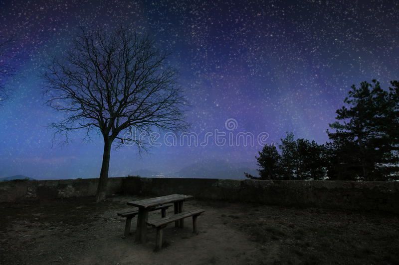 Dark blue starry sky with black tree silhouettes. stock image