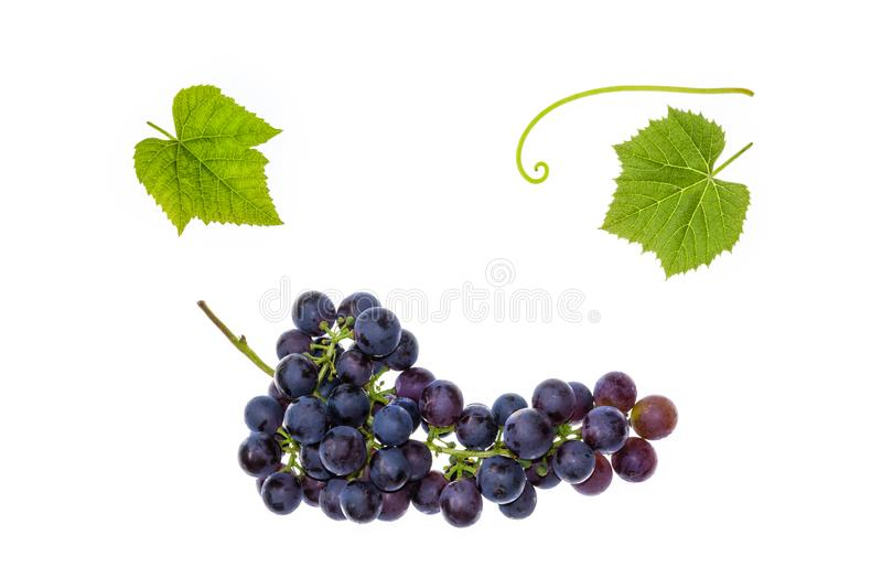Dark blue table grapes with leaves on white background. Bunch of dark blue table grapes with leaves on white background stock photo