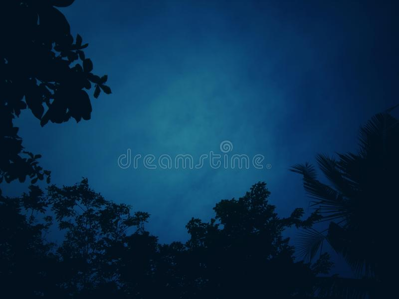Dark blue tone background with patterns of shadows,. Trees and twigs with sky for empty space and wallpapers stock images