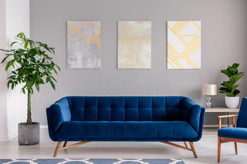A dark blue velvet couch in front of a gray wall with graphic paintings in a modern living room interior. Real photo. stock photo