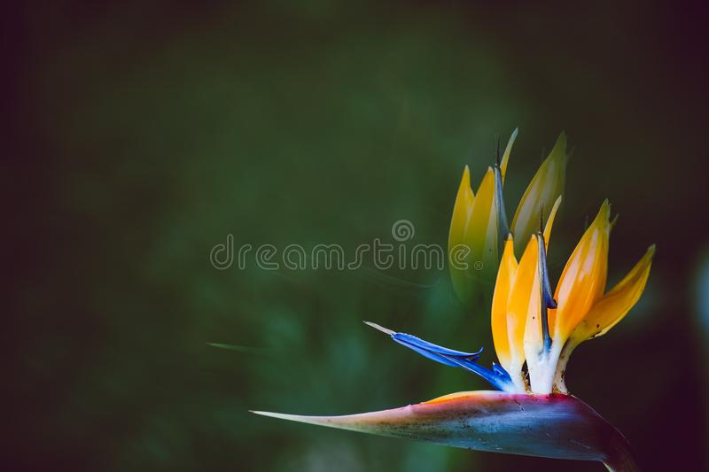 Summer blossoming crane flower background, selective focus, negative space stock photography