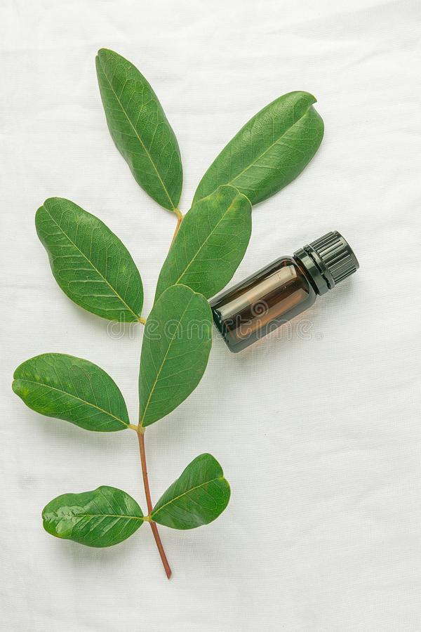 Dark Brown Bottle with Essential Oil Tree Branch with Fresh Green Leaves on White Linen Cotton Fabric Background. Ayurveda. Skin Body Care Organic Cosmetics stock photos