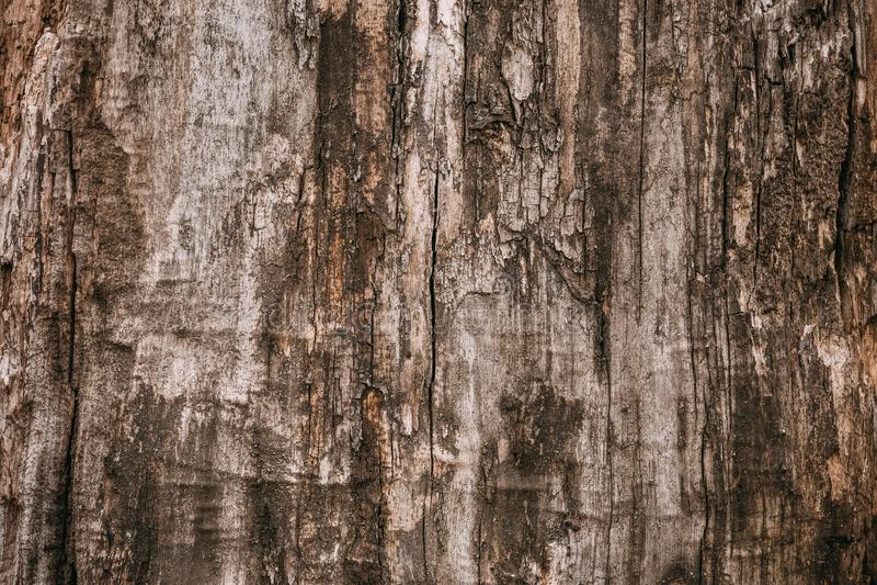 Dark brown dirty shabby tree bark. Old wood brown oak pattern background texture. Brown dark tree cracked bark background. royalty free stock photos