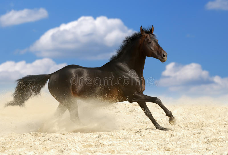 Download Dark brown horse stock image. Image of attention, breed - 11023337