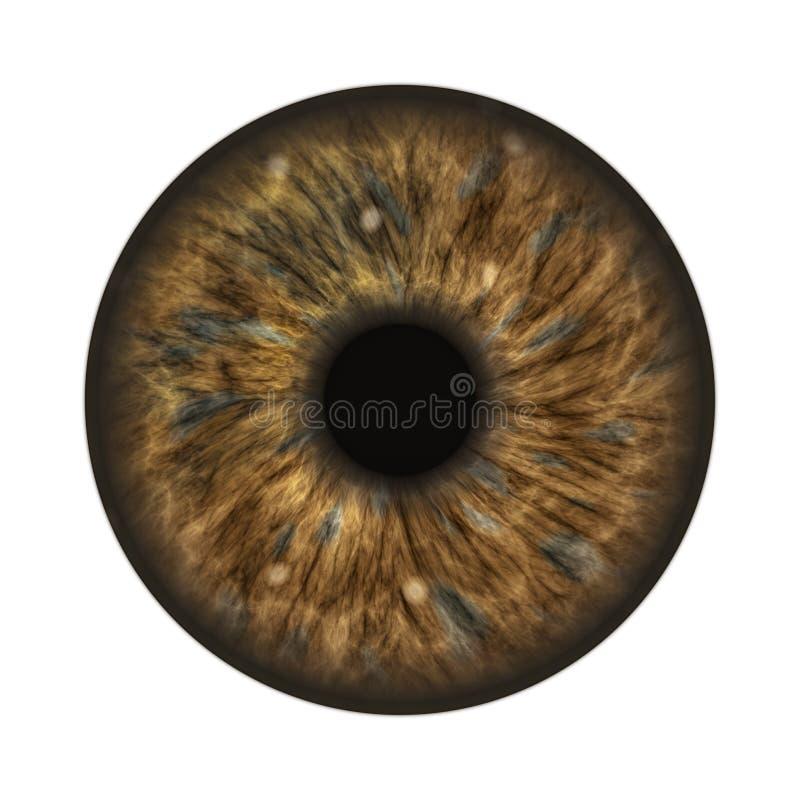 Dark brown human iris. An illustration of a dark brown human iris stock illustration