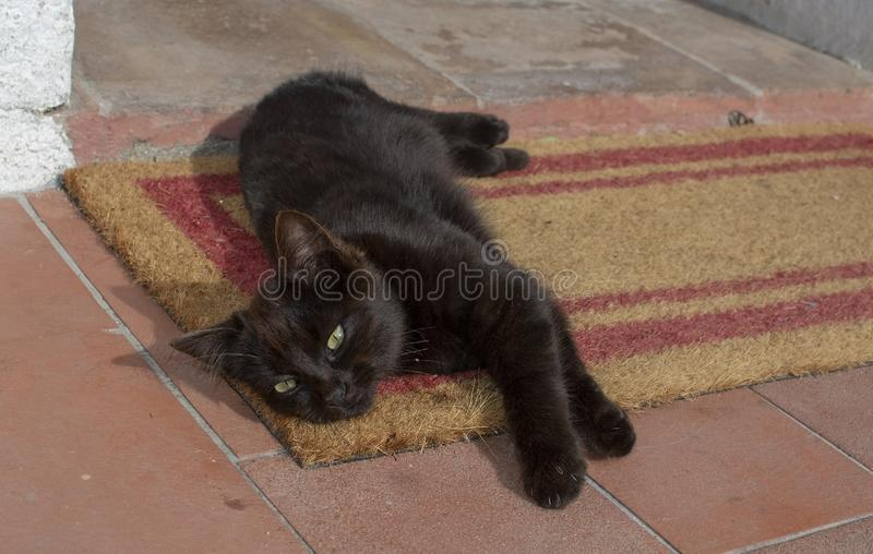 Dark brown kitten lays and stretches on fiber mat and terracotta floo. R in Sardinia, Italy royalty free stock image