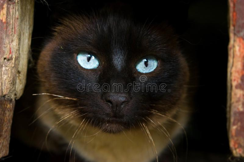Dark cat in a hole with clear eyes. And sweet look royalty free stock images