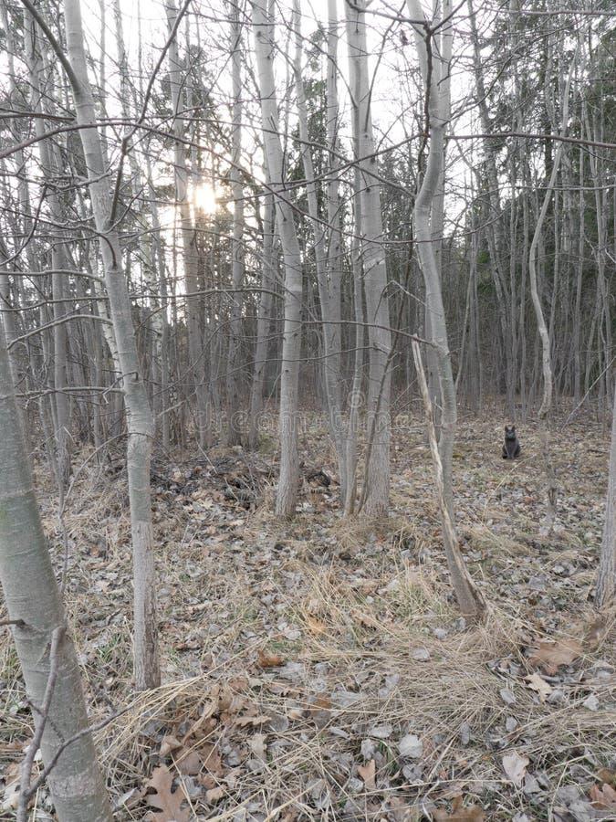 Cat in the woods. Dark cat sitting in the woods stock image
