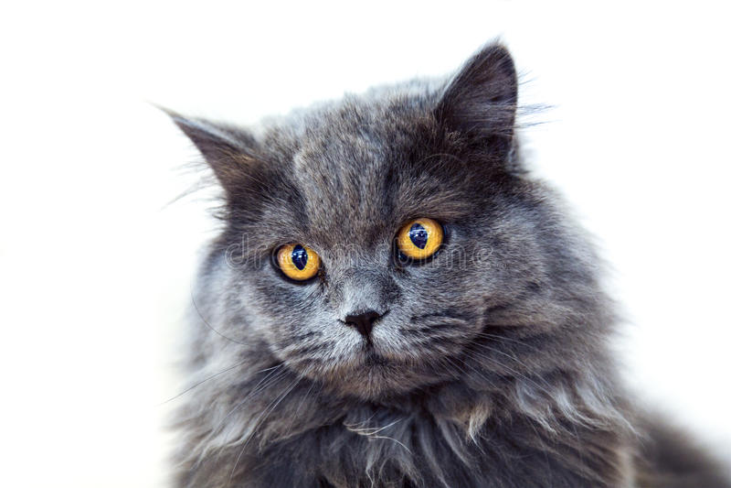 Dark cat on white background stock images
