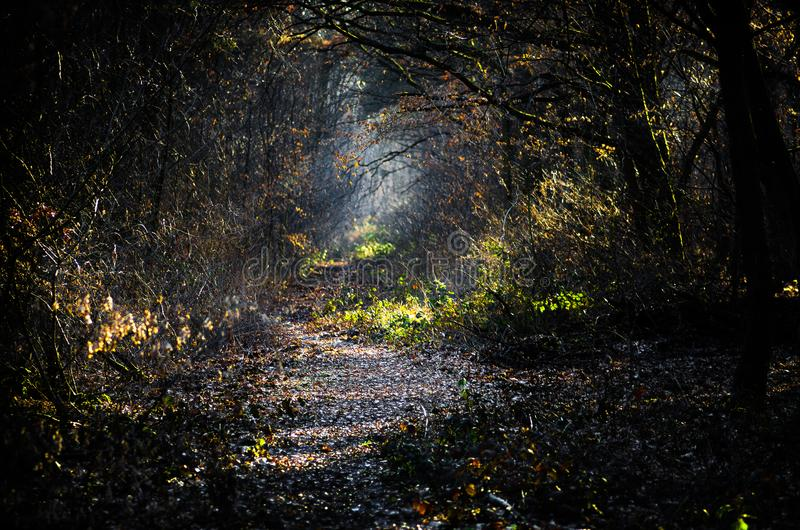 Dark creepy forest with sunlight royalty free stock photos